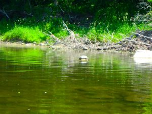Kayaking Yoga Meditation - Solstice - Jun 21 2018-60