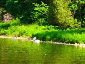 Kayaking Yoga Meditation - Solstice - Jun 21 2018-74