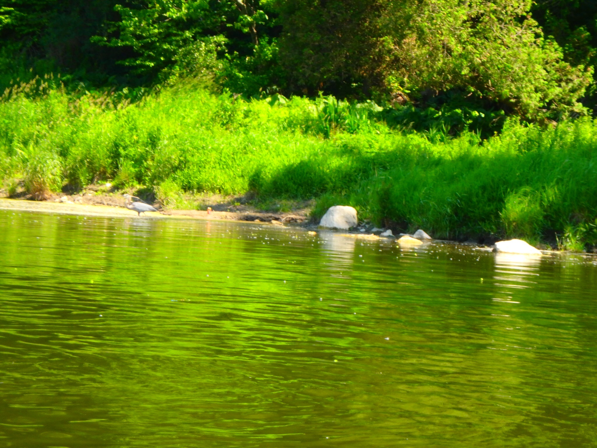 Kayaking Yoga Meditation - Solstice - Jun 21 2018-75