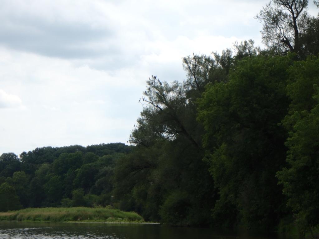 ARTC - River Day Aug 20, 2019-62